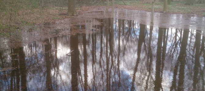 Ungewöhnlich viel Wasser im Rohrbusch-Wald in Roxel