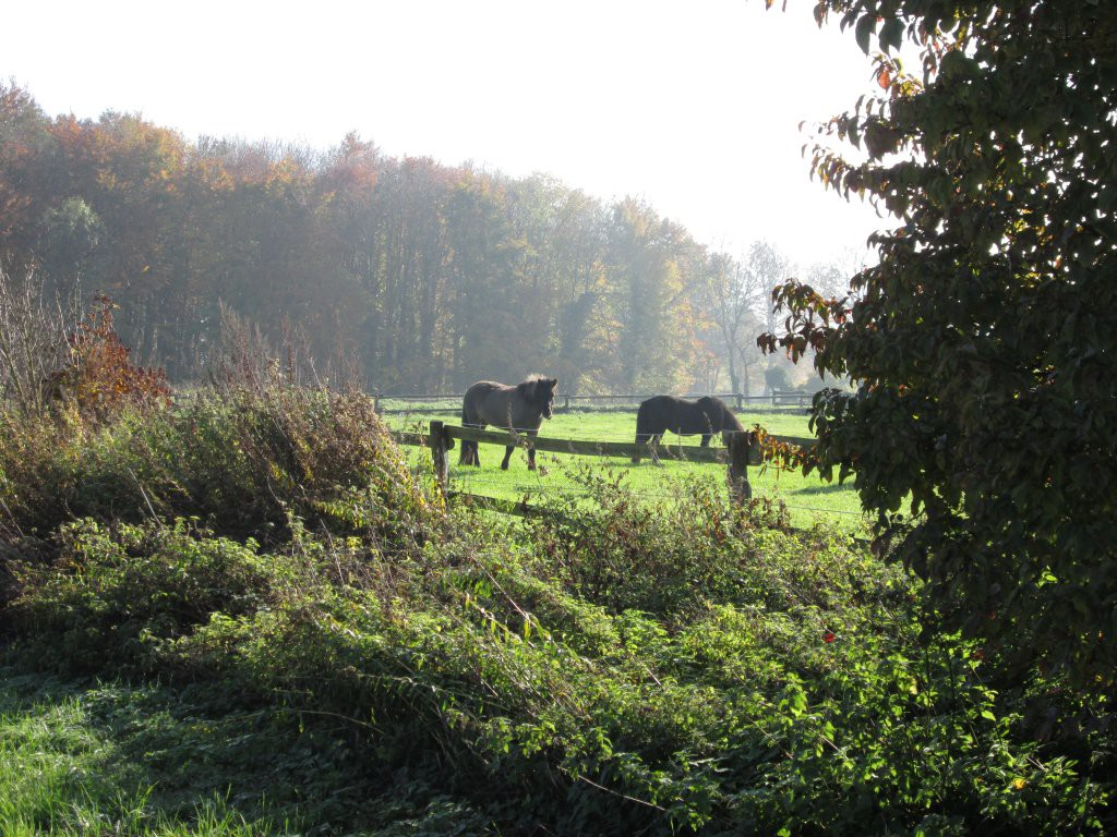 Pferdekoppel am Rand des Baumberger Ludgeruswegs