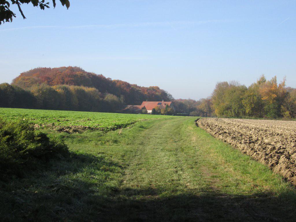 Vielfach wird der Baumberger Ludgerusweg über Feldwege geführt