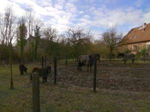 Ponys und Pferde in Lasbeck