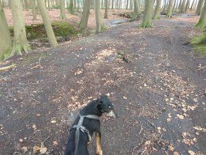 Rocky im Wald in Herkentrup