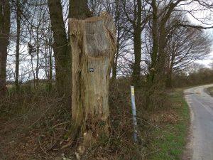 Wanderung Billerbeck - Baumberge, Roxel. 2. März 2020: Baumstumpf mit Wegemarkierung