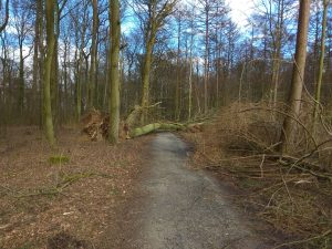 Wanderung Billerbeck - Baumberge, Roxel. 2. März 2020: umgestürzter Baum