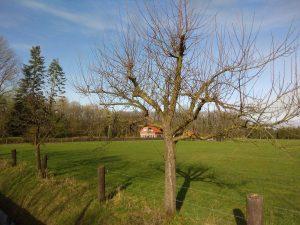 Blick auf einen Baum im Brock