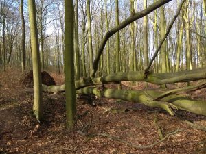In den Baumbergen waren die Folgen der Stürme zu sehen