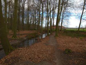 Wald in Herkentrup