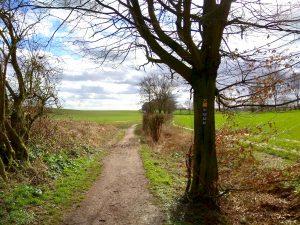 Wanderung Billerbeck - Baumberge, Roxel. 2. März 2020: Weg am Hang der Baumberge