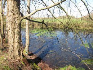Kleiner Teich im Schonebeck bei Burg Hülshoff