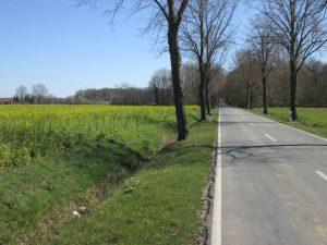 Straße Schonebeck zwischen Hohenholte und Roxel