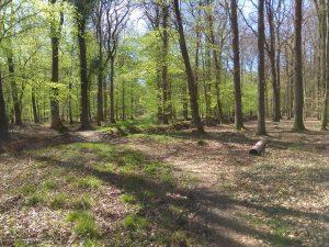 Weg über die Landwehr im Wald zwischen Burg Hülshoff und Brock in Roxel.