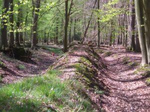 Landwehr im Wald zwischen Burg Hülshoff und Brock in Roxel.