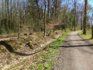 Auf dem Weg zum Haus Brock im Wald zwischen Burg Hülshoff und Brock